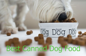Top 6 Best Canned Dog Food
