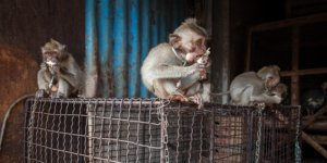 Beyond wet markets: the many problems with wildlife trade