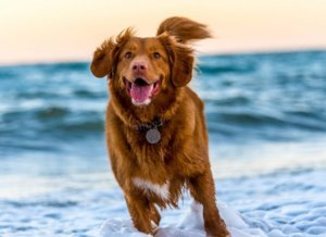 Holidaying with pets -Take a relaxing break with your four legged friend