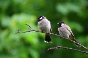 Know all about Birds Species