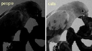Cat Night Vision Is Better than Humans Or Not?