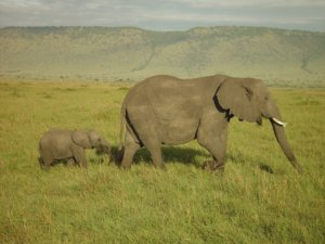 Understanding elephant empathy and their emotions