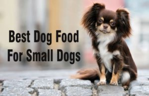 Top 7 Best Dog Food For Small Dogs – Reviews & Ratings