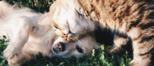 8 Tips To Bringing A New Pet Home