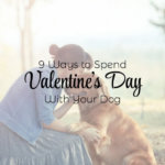 9 Ways to Spend Valentine's Day with Your Dog