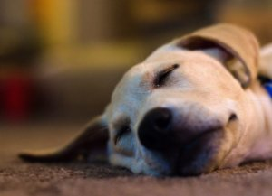 What to do if your pet is lost?