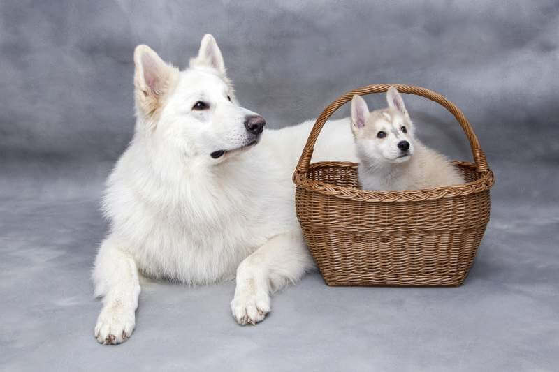 Must Have Items for New Puppy Parent