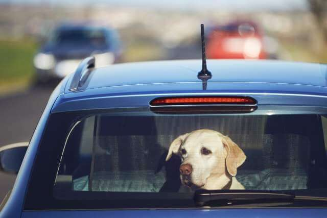 travel-with-dog