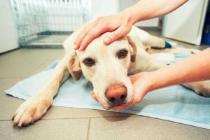 10 Natural Home Remedies for Dog Ailments