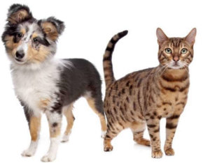 Tricks to Teach Your Cat and Dog to Get Along