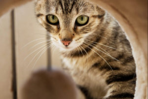 A spotlight on the features of cat scratching posts