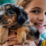 Bringing home a new puppy – how to prepare