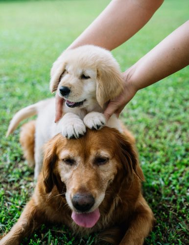 new puppy Pet Care