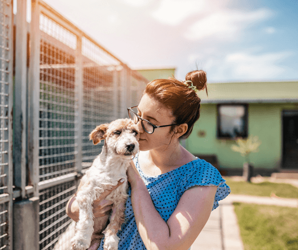 How to help animal shelters?