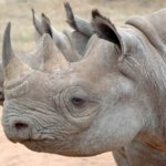 Nine reasons to fight for a global wildlife trade ban