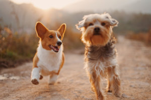 Truth or Tail? – 10 Old wives tales surrounding dogs