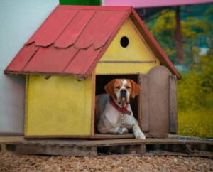 Why Metal Buildings Create the Best Dog Kennels ?