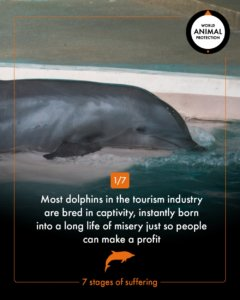 Dolphins in captivity endure seven stages of suffering in their tragic lives