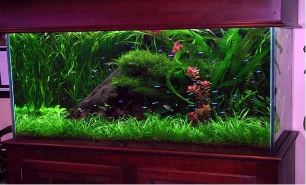 Are Big Aquariums Better? And What's the Perfect Size?