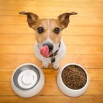 How To Buy The Best Natural Dog Supplements For Your Dog?