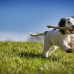 How to Calm Hyperactive Dogs?