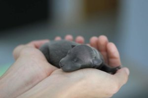 Everything To Do During The First 48 Hours With A Newborn baby Puppy
